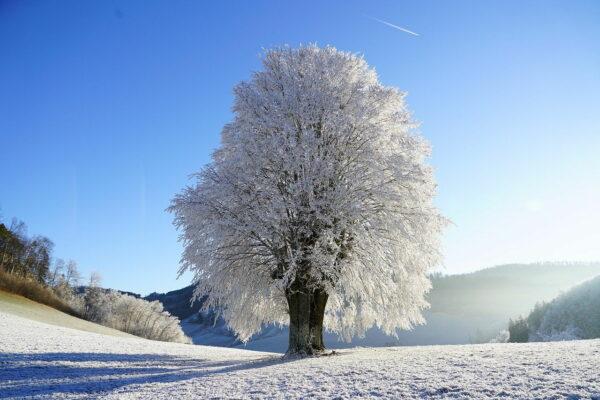 Winterlandschaft mit geringer Luftfeuchtigkeit