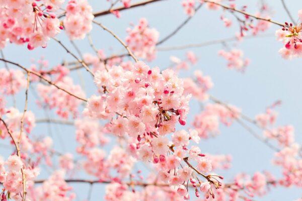 Richtig lüften im Frühling