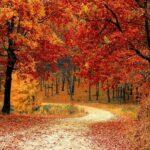Richtig lüften im Herbst