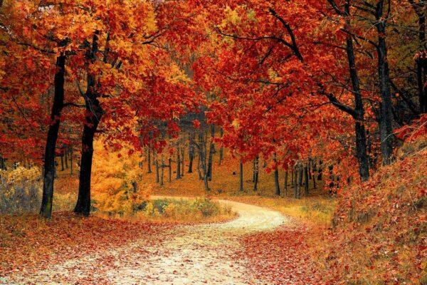 Richtig Lüften im Herbst wenn die Blätter bunt werden
