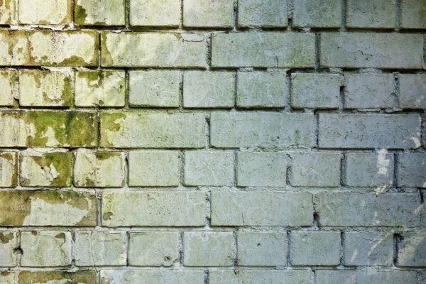 Schimmel an Wand und Mauerwerk