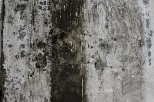 schwarzer Schimmel an einer Wand