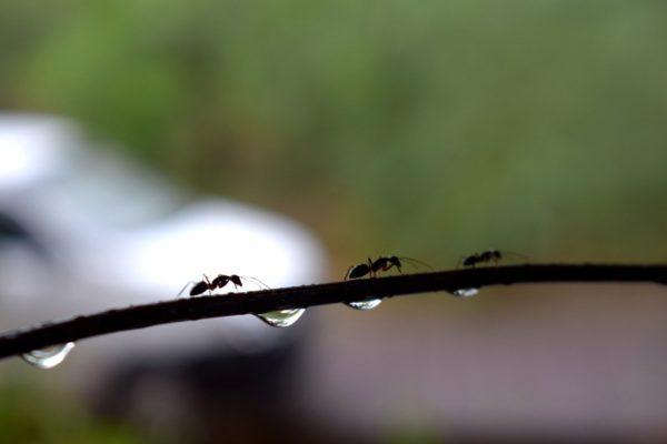 Wassertröpfchen als Zeichen der Luftfeuchtigkeit